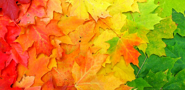 Rainbow_Leaves_by_MapleRose