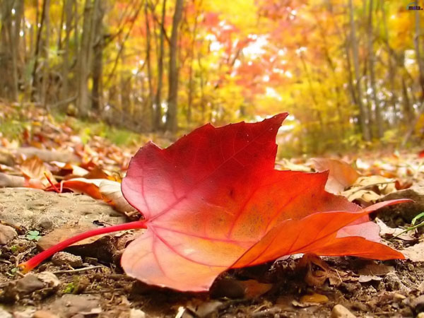 Last-Leaves-In-Autumn