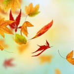 Falling Well: The Lifecycle of a Leaf