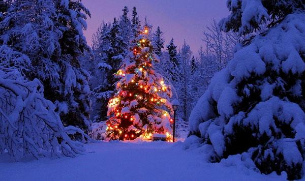 Christmas-Scene-christmas-2736054-1024-768
